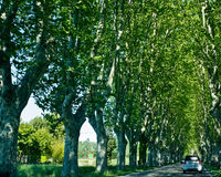 Driving a Tunnel of Trees Royalty Free Stock Image