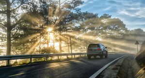Free Cars Driving On The Country Asphalt Road Through Pine Forests Stock Photos - 118113873