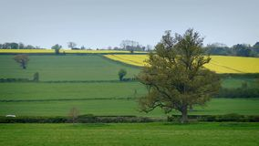 Cars driving past fields in rural landscape. Cars passing on road through fields in the daytime stock video footage