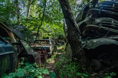 cars in a forest royalty free stock photos