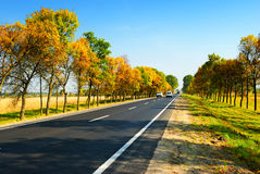 Cars on highway between autumn trees