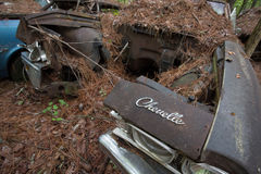 Cars in junk yard Royalty Free Stock Images