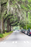 Cars Parked Along Road Under Southern Oaks Stock Images