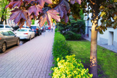 Cars parked on the street with lawn and maple Royalty Free Stock Photography