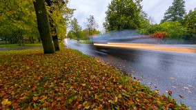 Timelapse of cars passing by and grass covered with colorful autumn fall leaves. Cars passing by in the rain stock video footage