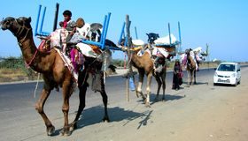 Cars of today are too small to accommodate the house hold carried by the 'Ship of Desert' camels Stock Image