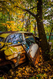 Cars and tree in a junkyard. Royalty Free Stock Image