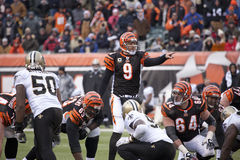 Carson Palmer at the line of scrimmage. Carson Palmer, quarterback for the Cincinnati Bengals calls out signals during the games against the New Orleans Saints Stock Images