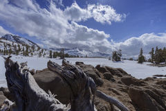Carson Pass Snow lizenzfreie stockfotos