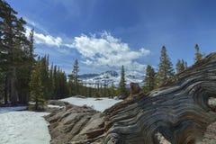 Carson Pass Winter Stockbild