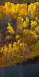 Carson River Aspens Royalty Free Stock Photos