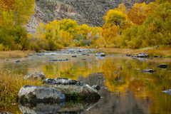 Carson River Golden Aspens Royalty Free Stock Photography