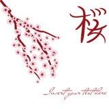 Cartão 3 de Sakura Fotografia de Stock Royalty Free