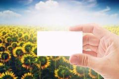 Cartão agrícola de Holding Blank Business do fazendeiro no girassol Fie Fotografia de Stock