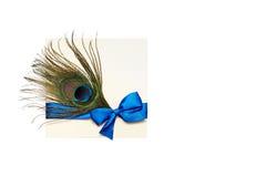 Cartão bonito com a pena azul da fita e do pavão do cetim isolada foto de stock royalty free