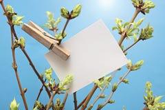 Cartão branco escrito mensagem que pendura em frondoso verde Fotografia de Stock