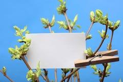 Cartão branco escrito mensagem que pendura em frondoso verde Imagens de Stock