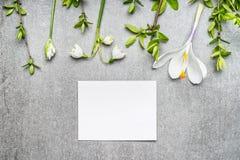 Cartão branco vazio com snowdrop, flores dos açafrões e galhos da mola, vista superior primavera Fotos de Stock