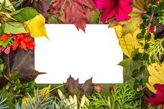 Cartão branco vazio Folhas e ramos caídos de árvores de Natal Fundo branco Fotografia de Stock Royalty Free