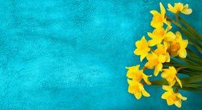 Cartão com as flores amarelas do narciso Fotografia de Stock Royalty Free