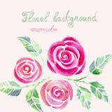 Cartão com as flores das rosas da aquarela Fotos de Stock