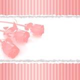 Cartão com as rosas cor-de-rosa no fundo cor-de-rosa retro Imagem de Stock