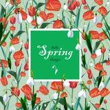 Cartão com as tulipas da mola vermelha e os lírios do vale Foto de Stock Royalty Free