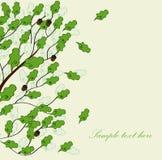 Cartão com carvalho verde Imagens de Stock
