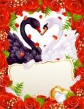 Cartão com cisnes Fotografia de Stock