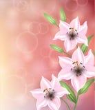 Cartão com corações das flores O dia de mãe do cartão, o dia de Valentim Fotografia de Stock