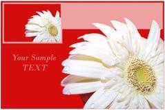 Cartão com flor do herber. imagem de stock royalty free