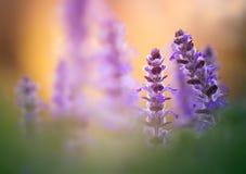 Cartão com flores Fotos de Stock