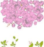 Cartão com flores cor-de-rosa Fotografia de Stock
