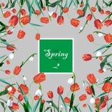 Cartão com flores da mola Imagens de Stock
