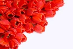 Cartão com a foto conservada em estoque das flores (tulipas vermelhas) Fotos de Stock Royalty Free