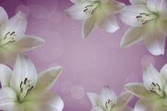 Cartão com lírios brancos fotos de stock royalty free