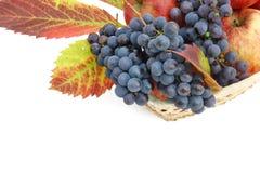 Cartão com maçãs e uvas Fotos de Stock
