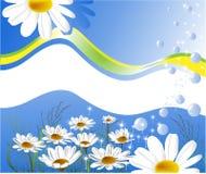 Cartão com margaridas ilustração royalty free