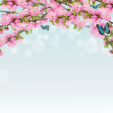 Cartão com o arbusto de florescência da mola fresca e lugar vazio para y foto de stock