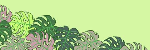 Cartão com um quadro para as folhas tropicais da massa em um fundo verde para anunciar bandeiras Imagem de Stock Royalty Free