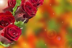 Cartão com um ramalhete das rosas Fotos de Stock