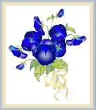 Cartão com um ramalhete dos pansies. Fotos de Stock