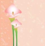 Cartão com uma flor Fotos de Stock Royalty Free
