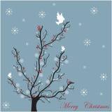 Cartão da árvore do inverno Fotografia de Stock