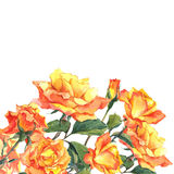 Cartão da aquarela com as rosas amarelas do jardim Fotografia de Stock Royalty Free