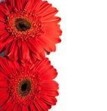 Cartão da flor com espaço para o texto imagens de stock