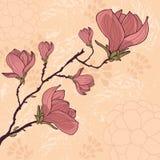 Cartão da flor da magnólia com lugar para seu texto Imagens de Stock Royalty Free
