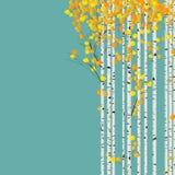 Cartão da floresta do vidoeiro ilustração do vetor