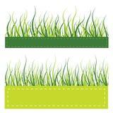 Cartão da grama verde Imagem de Stock Royalty Free