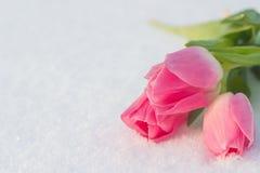 Cartão da mola com as tulipas na neve foto de stock royalty free